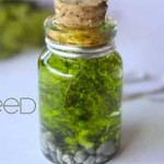 Make Your Own Bottle of Gillyweed